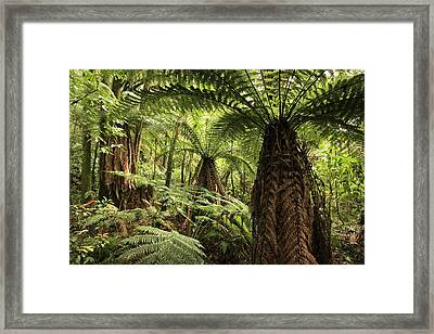 Tree Ferns Framed Print by Les Cunliffe