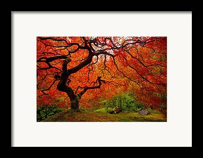 Fall Colors Framed Prints
