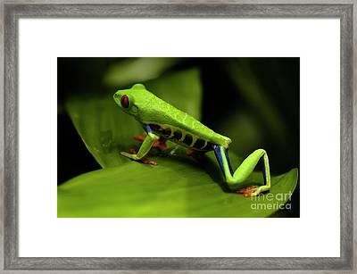 Tree Frog 12 Framed Print by Bob Christopher