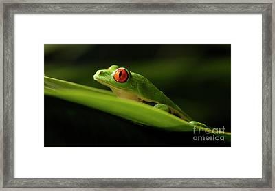 Tree Frog 7 Framed Print by Bob Christopher