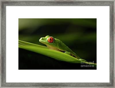 Tree Frog 8 Framed Print by Bob Christopher