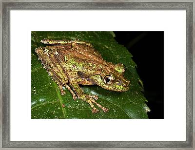 Tree Frog Framed Print by Alex Hyde