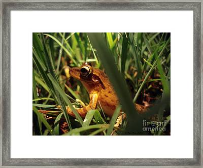 Framed Print featuring the photograph Tree Frog Chorus by Megan Dirsa-DuBois