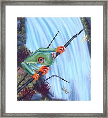 Tree Frog Framed Print by Darren Robinson