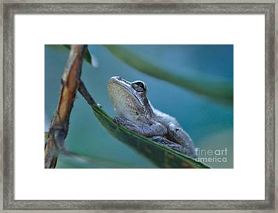 Tree Frog Gray Looks Up Into Blue Framed Print