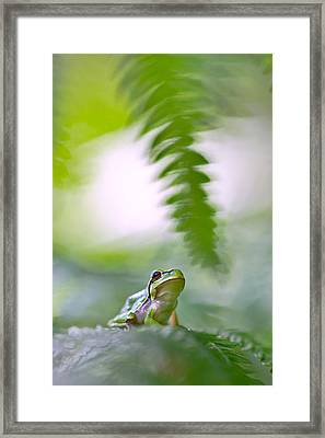 tree frog Hyla arborea Framed Print by Dirk Ercken