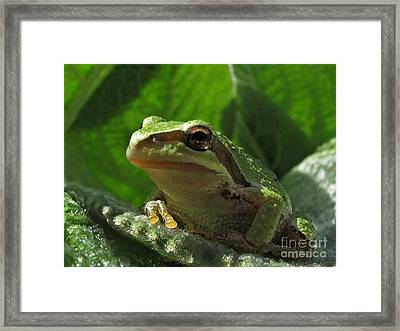 Tree Frog Framed Print by Inge Riis McDonald