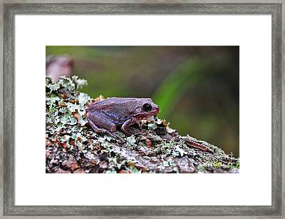 Tree Frog On An Old Log Framed Print by Al Powell Photography USA
