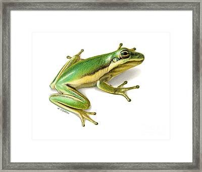 Green Tree Frog Framed Print by Sarah Batalka