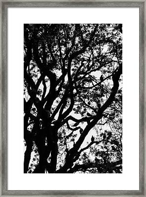 Tree Full Of Birds Framed Print by Sotiris Filippou