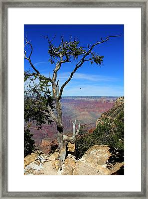 Framed Print featuring the photograph Tree Grand Canyon by Michael Hope