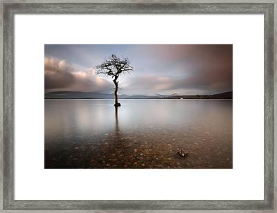 Tree Framed Print by Grant Glendinning
