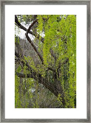 Tree Green Framed Print by Regina Avila