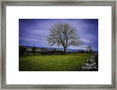Tree - Hadrian's Wall Framed Print
