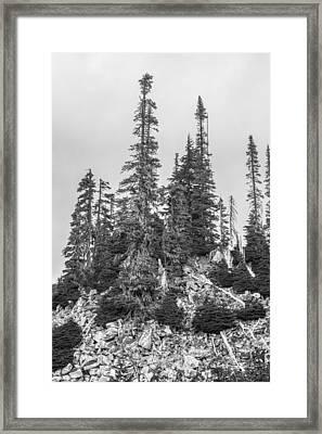 Tree Hill 2 Framed Print