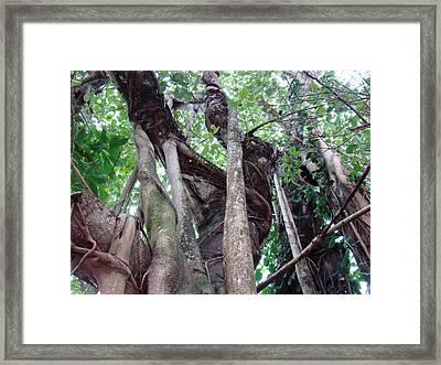 Tree Hugger 3 Framed Print by Van Ness