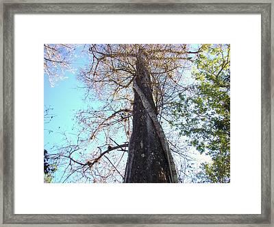 Tree Hugger 4 Framed Print by Van Ness