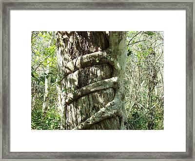 Tree Hugger 5 Framed Print by Van Ness