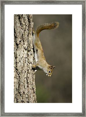 Tree Hugger Framed Print