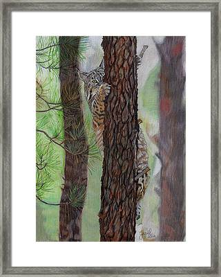 Tree Hugger Framed Print by Gail Seufferlein