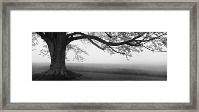 Tree In A Farm, Knox Farm State Park Framed Print by Panoramic Images