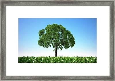 Tree In A Field, Artwork Framed Print by Leonello Calvetti