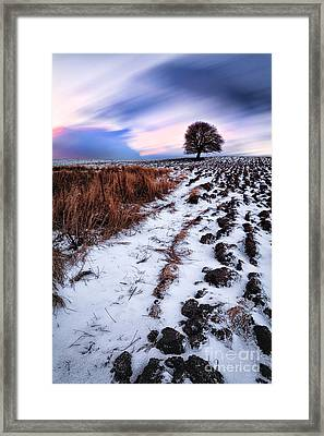 Tree In A Field  Framed Print by John Farnan