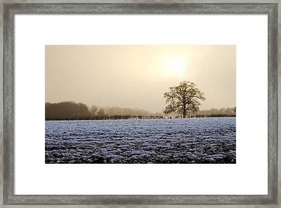 Tree In A Field On A Snowy Day Framed Print