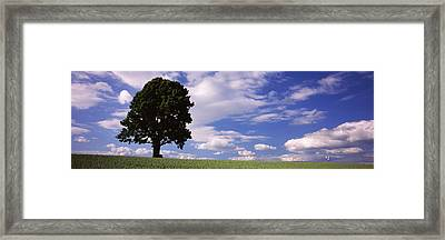 Tree In A Field With Woman Walking Framed Print by Panoramic Images