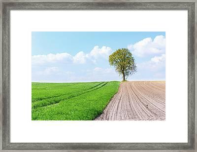 Tree In A Field Framed Print by Wladimir Bulgar