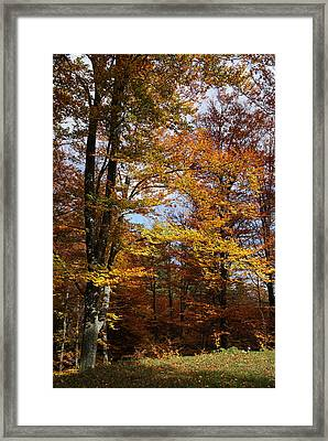 Tree In Autumn Light Framed Print