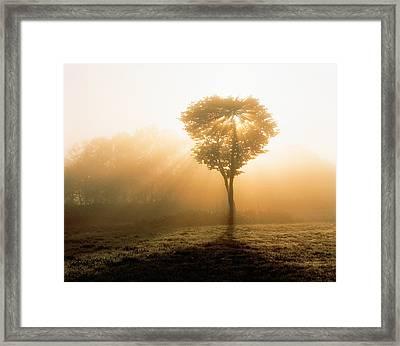 Tree In Early Morning Mist Framed Print