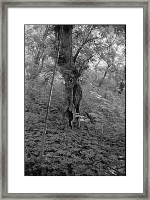 Tree In Elkins Park Framed Print by Julie VanDore