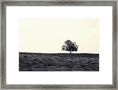 Tree In Field Framed Print by Kara  Stewart