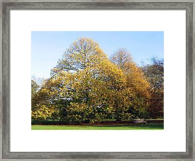 Tree In Kew Gardens Framed Print