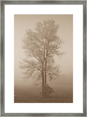Tree In Morning Fog Framed Print by Eje Gustafsson