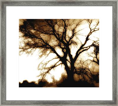Tree In Sepia Framed Print by Ann Powell