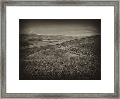 Framed Print featuring the photograph Tree In Sienna by Hugh Smith