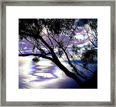 Tree In Silhouette Framed Print