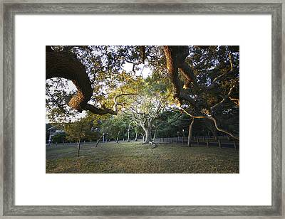 Tree In St. Augustine Park Framed Print