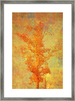 Tree In Sunlight Framed Print by Suzanne Powers