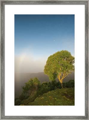 Tree In Sunlight, Tres Cruces Region Framed Print