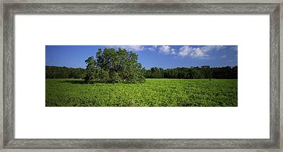 Tree In The Field, Everglades National Framed Print by Panoramic Images