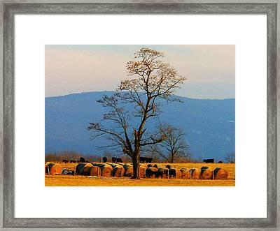 Tree In The Field Framed Print by Joyce Kimble Smith