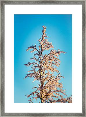 Tree In The Frozen Landscape, Cold Framed Print