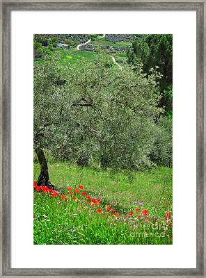 Tree In The Meadow Near Ronda  Framed Print by Mary Machare