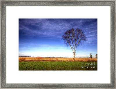 Tree In The Murnauer Moos Framed Print