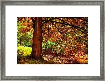 Tree In The Park. De Haar Castle. Utrecht  Framed Print by Jenny Rainbow