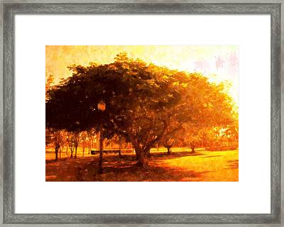 Tree In The Park Framed Print by Florene Welebny