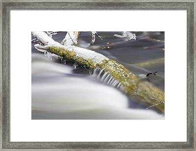 Tree In The Red Cedar River Framed Print by John McGraw